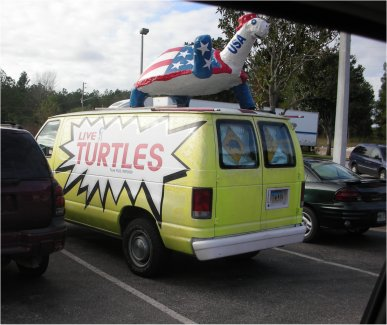 AdventuresInTrafficLiveTurtles2.jpg