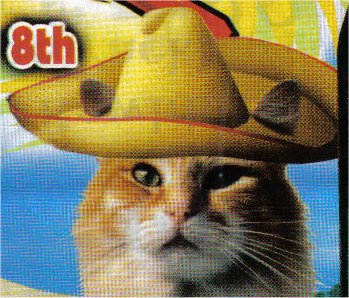 CatSombrero.jpg