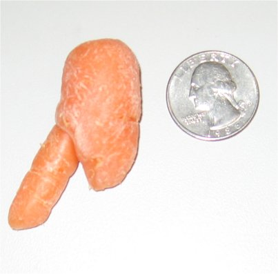 MitchCarrotPenis8.jpg