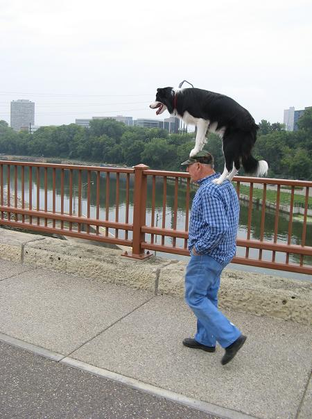 My Weird 24 Hours - Guy Walking With A Dog On His Head.JPG